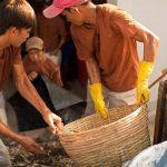 ủ chượp nước mắm Nam Ngư